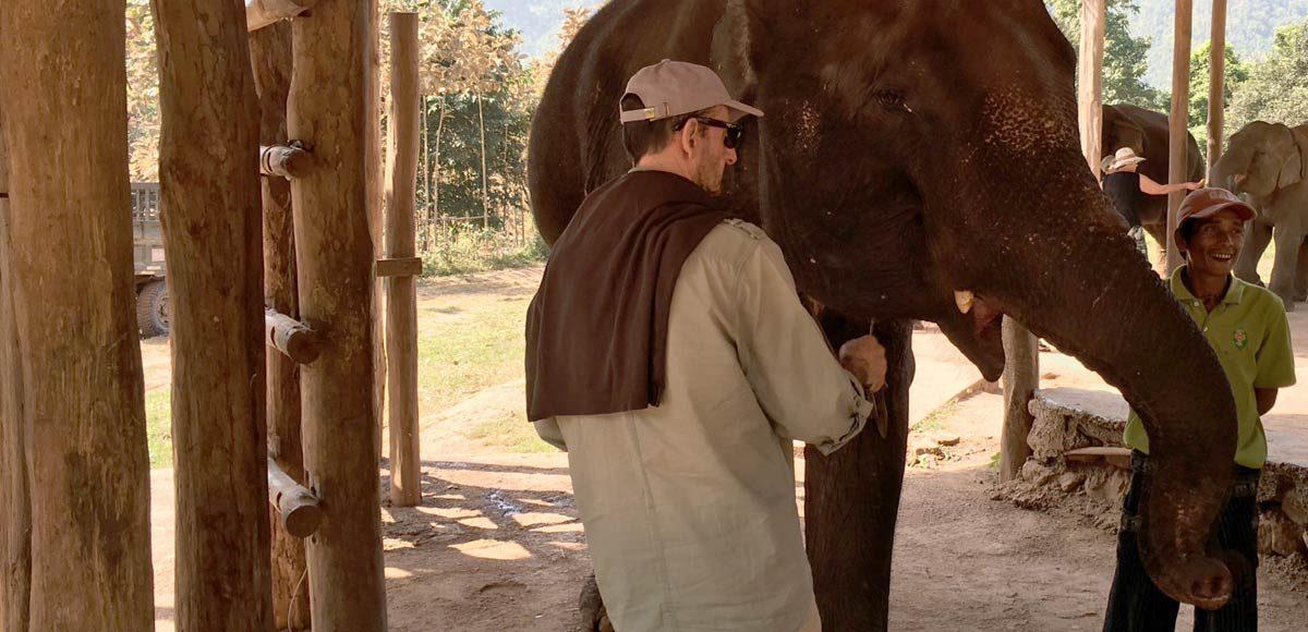 A Reforma dos Elefantes